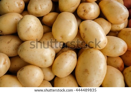 The new harvest potatoes at local farm market