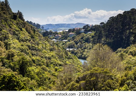 The New Zealand native bush and lake - stock photo