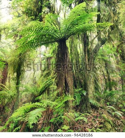The New Zealand tree fern - stock photo