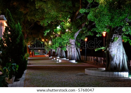 The night scene, growing trees beside a street - stock photo
