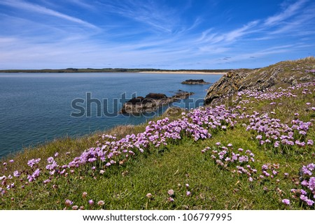 the northern end of Newborough beach on the North Wales island of Anglesey as seen from Llanddwyn Island. Sea pinks, sea thrift in the foreground.
