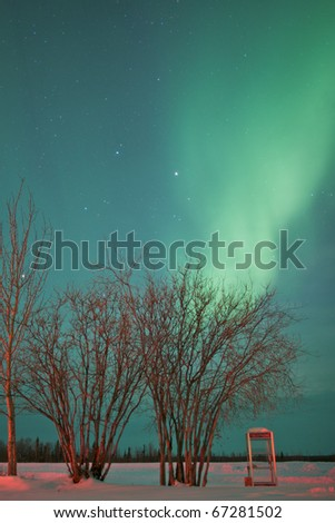 The northern lights glow over a telephone booth and group of trees in the arctic circle at Bettles, Alaska.  Vertical shot. - stock photo