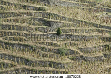 The Northern Rhone is most famed as the home of Syrah. - stock photo