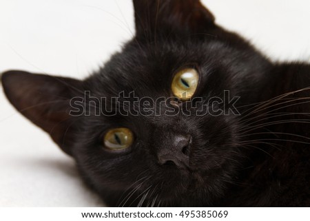 The nose and the smile of a black cat.