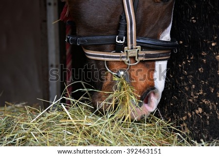 The nostrils of horses - stock photo