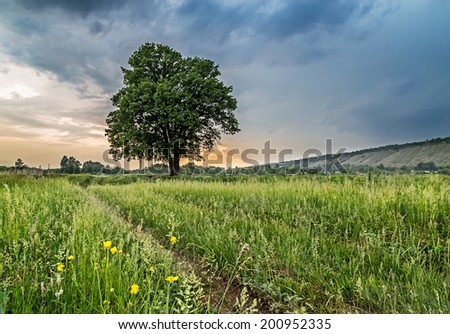 the oak tree on a green field against the cloudy sky. - stock photo