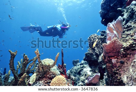 The ocean provides this diver with a colorful underwater reef in all its splendor in the Southern Grenadines,Windward Isles,Caribbean - stock photo