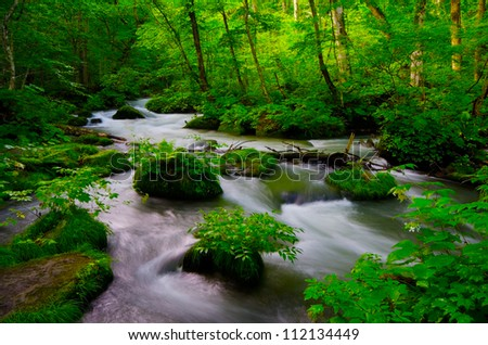 The oirasekeiryuu stream, Towada-Hachimantai National Park, Japan. - stock photo