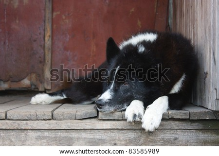 The old courtyard dog on the street. - stock photo