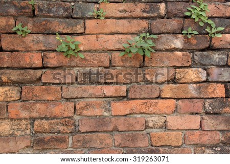 The old cracked wall of the abandoned ruins with small plant. - stock photo