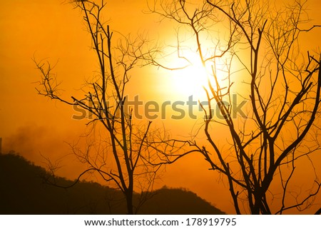 the Old dead trees with sunset background