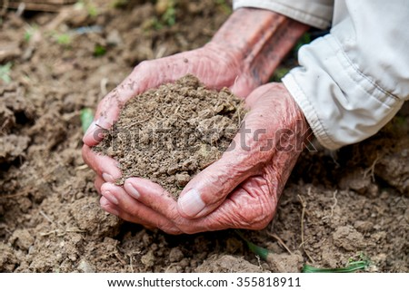The old man hand holding soil, Organic plant fertilizer on hand for plantation  - stock photo