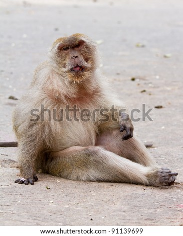 The old monkey. - stock photo