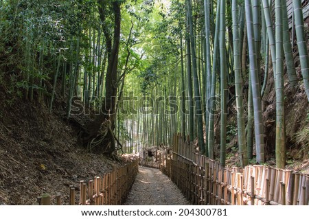 The Old Samurai Footpath in Sakura Japan - stock photo