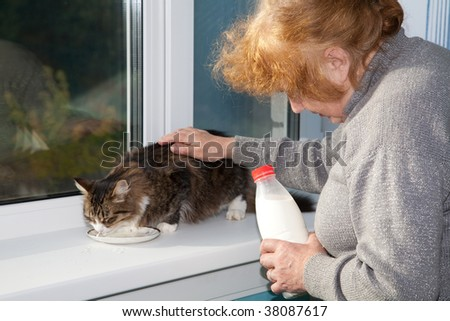 The old woman allows to have  drink  cat milk from a saucer - stock photo