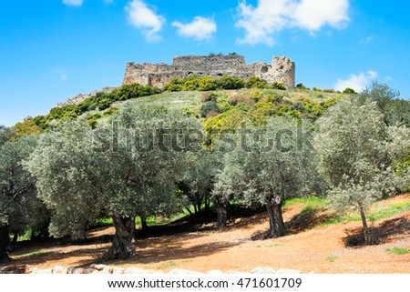 The olive trees growing at a foot of a hill at which top there are ruins of a fortress of Nimrod, Israel