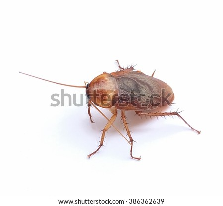 The one cockroach is going to die at my house.