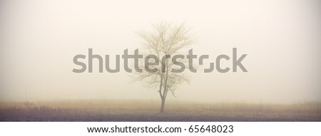The only tree of the field in the fog in the morning - stock photo
