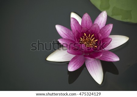 the opening lotus flower, lotus leave and lotus seed in summer.