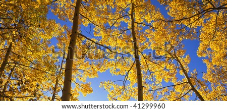 The Ophir Needles, with aspen trees in the foreground, photographed during the autumn season in the Uncompahgre National Forest of Colorado. - stock photo