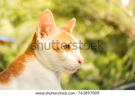 The orange cat is looking straight ahead. The back is a beautiful green background.