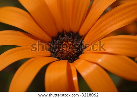 the orange flower in botany  garden , close-up - stock photo
