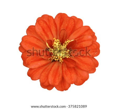 The orange flower with yellow stamens isolated on the white - stock photo