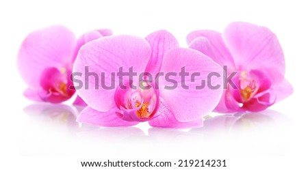 The orchid flowers isolated on white background - stock photo