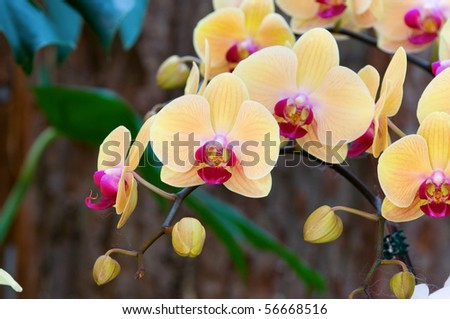 The orchis of spring, yellow lady slipper - stock photo