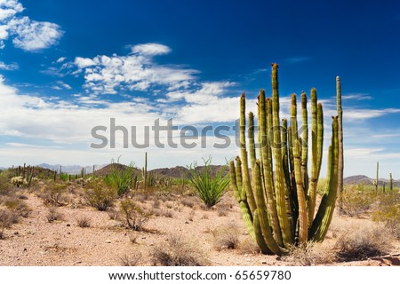 The Organ Pipe Cactus national monument is far from other popular tourist sites and is relatively little visited. - stock photo