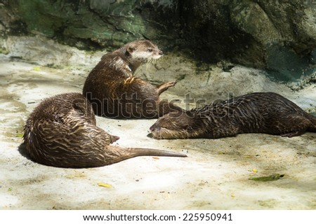 The otters are sunbathe in the morning