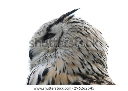 The Owls (Strigiformes) are an order of birds