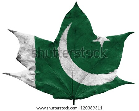 The Pakistani flag painted on  dried autumn leaf - stock photo