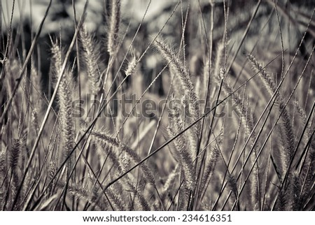 The pampas in dramatic black and white style - stock photo