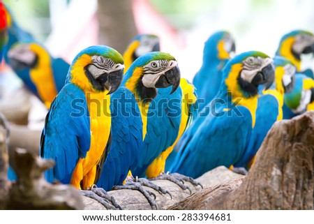 The parrot perched on a branch. - stock photo