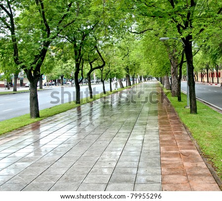 The Path  along tamarind trees - stock photo