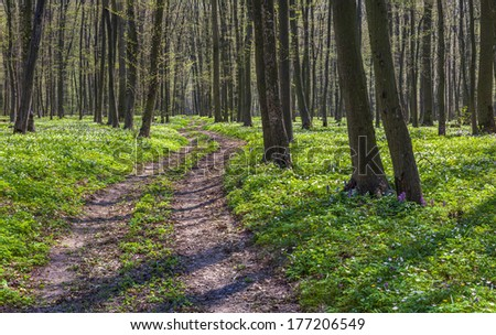 The path between the fields of blooming flowers in the spring forest. - stock photo