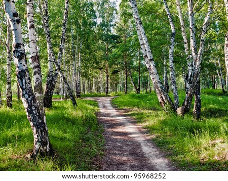 The path in the woods - stock photo