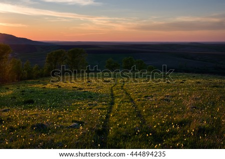 The path on the hill through the meadow with flowers on a background of trees illuminated by the setting sun and wide horizon under a colorful pink sky. Altai Mountains, Siberia, Russia. - stock photo