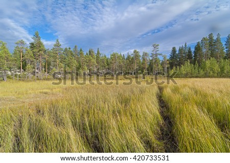 The path through the swampy meadow on the edge of the forest. Karelia, Russia.