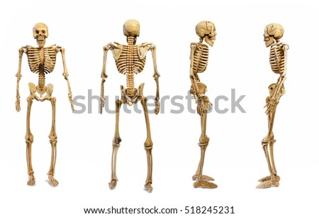 Pattern Human Skeletons Isolated On White Stock Photo Royalty Free