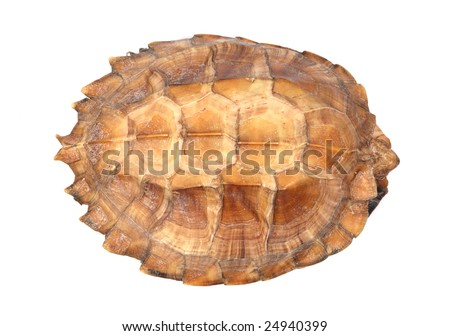 the patterned shell of a turtle