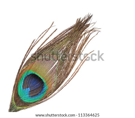 The peacock feather on a white background - stock photo