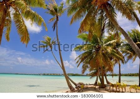 the perfect beach of Bora Bora Island, French Polynesia. With palms, white sand and turquoise lagoon - stock photo