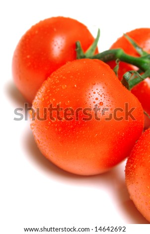 The perfect juicy tomatoes covered by drops of water, on a green branch. Isolation on white. Shallow DOF