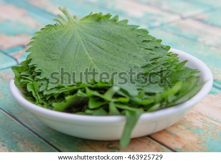The perilla leaves, also known as shiso leaf, oba leaf or beefsteak plant in wooden bowl over wooden background