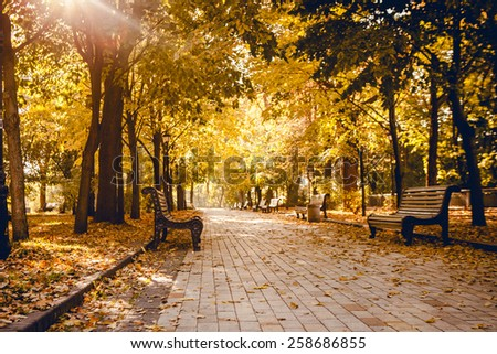 The perspective of the row of benches in autumn park while fall with walking people in background  - stock photo