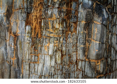 The Petrified Wood Texture Background - stock photo