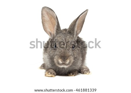 The photo depicts a rabbit on a white background
