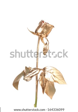 The photo of beautiful golden rose. Isolated on a white background. - stock photo